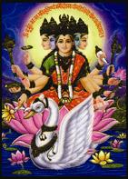Gayathri-8